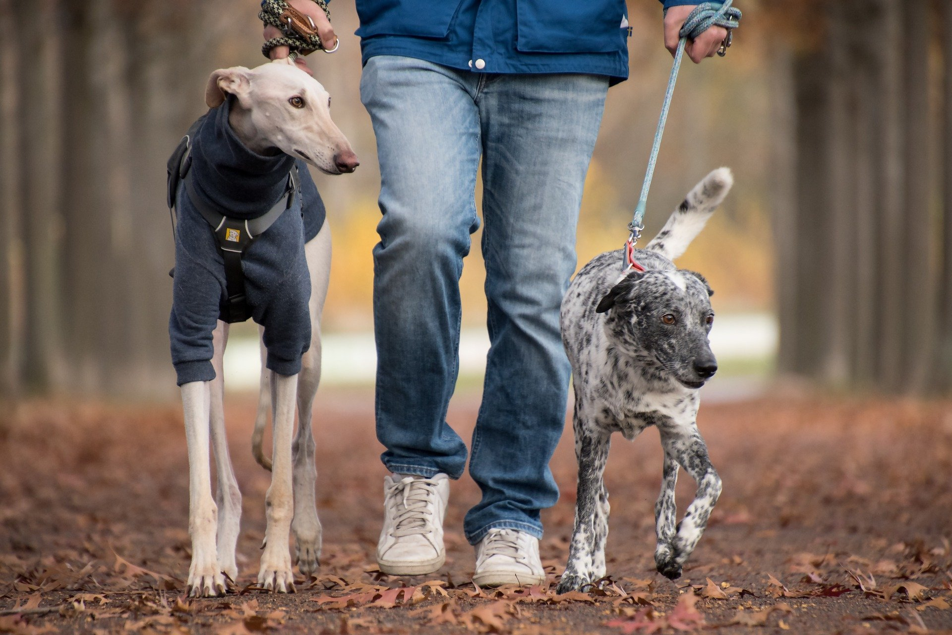 Pet Custody – PA Laws May Change